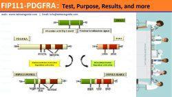 FIP1L1-PDGFRA
