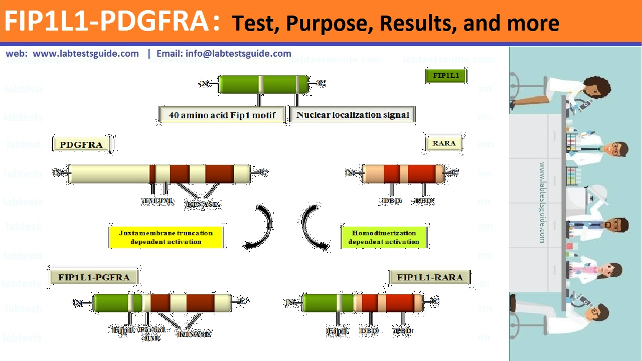 FIP1L1-PDGFRA Test