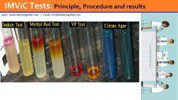 IMViC Tests