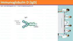 Immunoglobulin D (IgD)