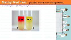 Methyl Red Test