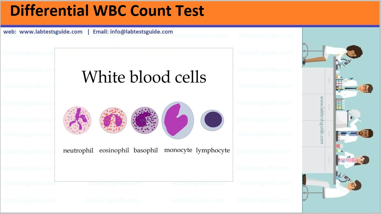Differential WBC Count Test