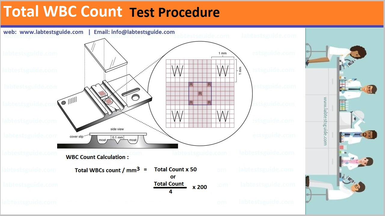 Total WBC Count Test