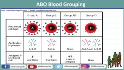 ABO Blood Grouping