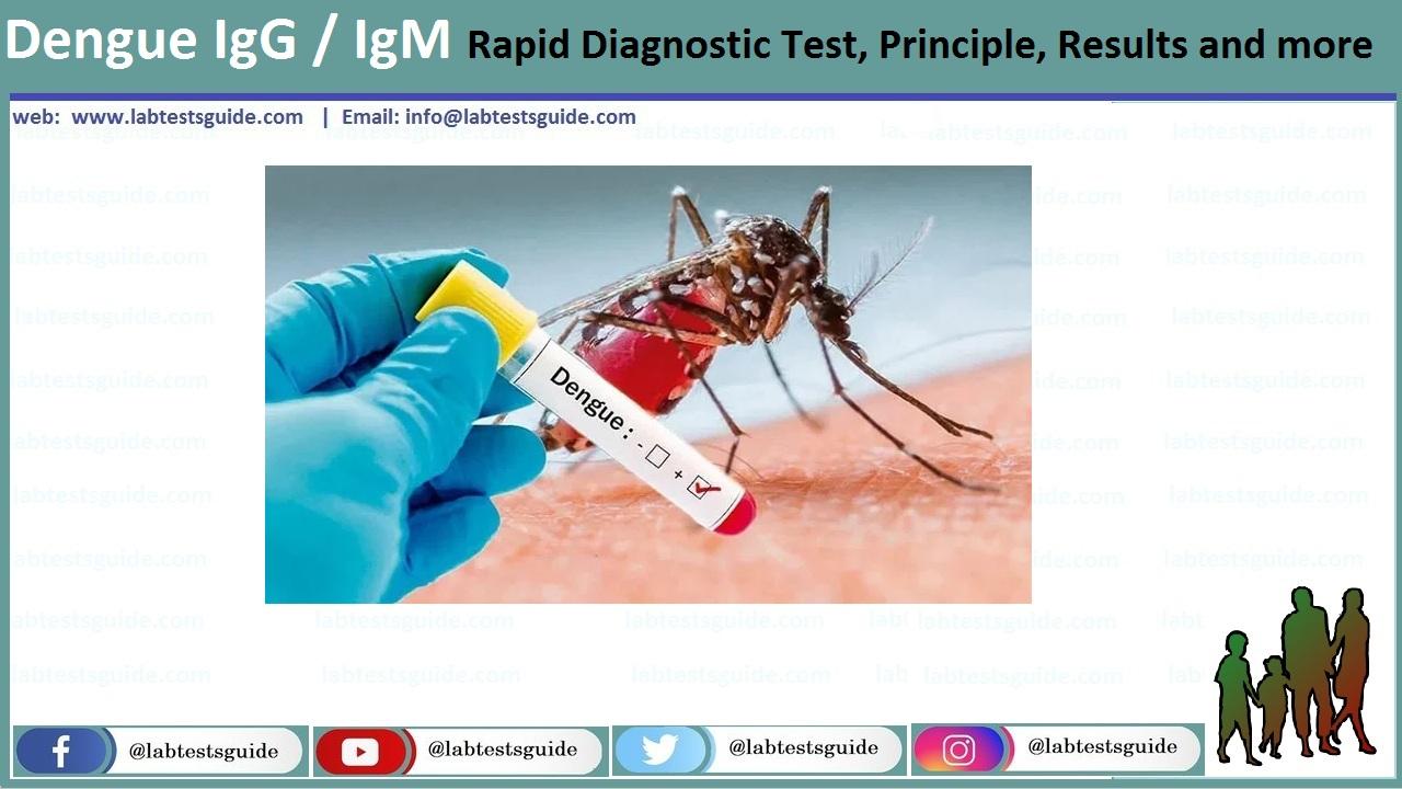 Dengue IgG / IgM