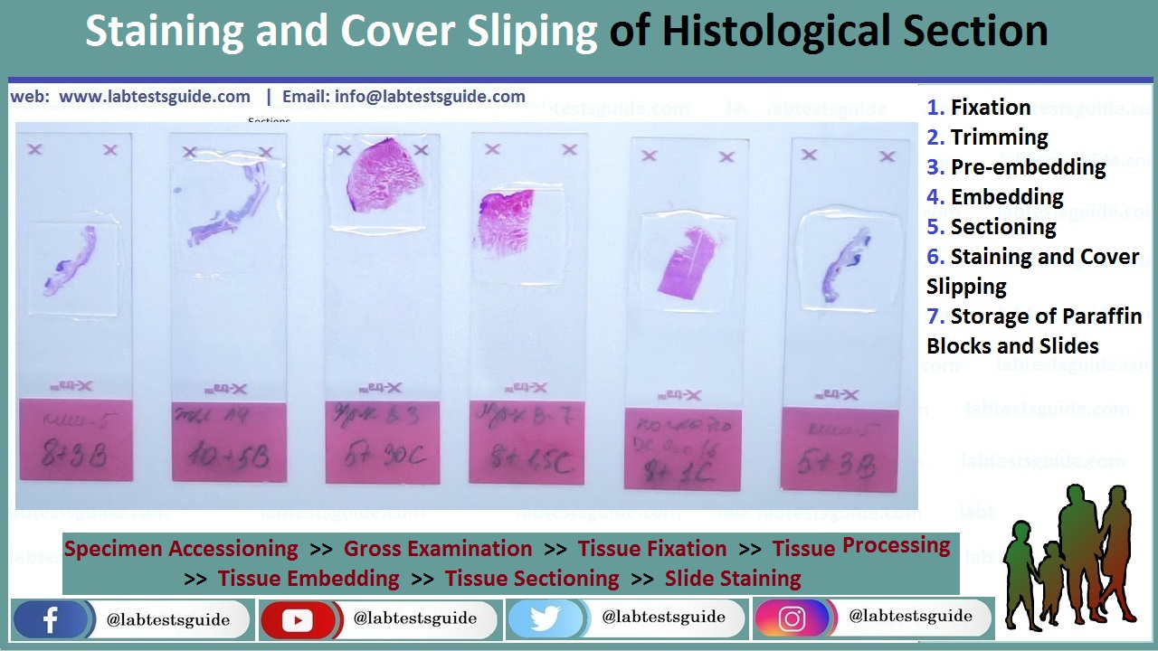 Histology Staining