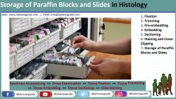 Storage-of-Paraffin-Blocks-and-Slides